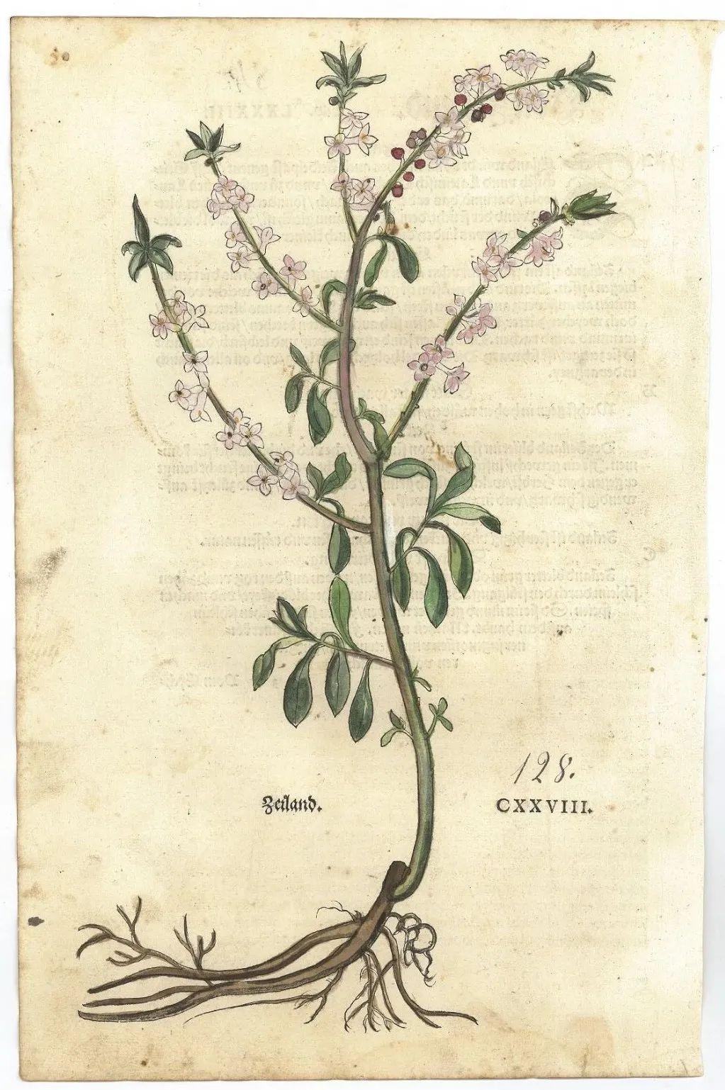 释展丨蒋澈:草药典籍中的植物图像